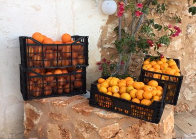Son Pou Orangen